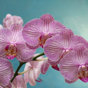 Orchidee & Co